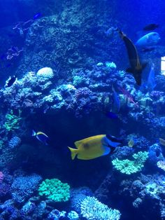 Love those beautiful pops of color under the sea, Aquarium of the Pacific in Long Beach, CA. Sea Aquarium, Long Beach, Under The Sea, Wonderful Places, Fun Activities, Color Pop, Places To Visit, California, Vacation
