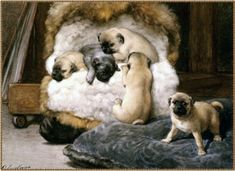 "This is just one of many antique european paintings from the 1800s that shows the true exsistense of the silver/grey pug.This painting is titled ""Nest of Puppy Pugs.""by Otto Eerelman"