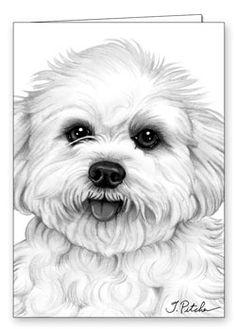 bichon frise coloring - Google-haku