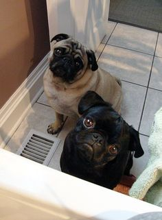 The bathtub is always more interesting when we're not the ones in it. Bathroom buddies.