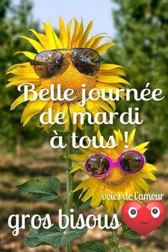 Belle journée de mardi à tous ! gros bisous #mardi tournesols lunettes de soleil drole bonne journee