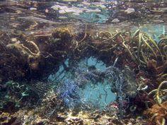 Ik wilde met mijn project de plastic uitbeelden. Dit heb ik gedaan door een vis te maken die vol zit met plastic en dat ook uitkotst. Vissen in de zee eten namelijk dit plastic op daar door gaan er heel veel zee dieren dood. Ik vind de plastic soep heel erg, omdat er zo veel dieren dood gaan. Ik hoop dat het snel verholpen wordt.