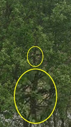 """Paul Stevenson, claims Margaret Moore spoke to him through the tree during a ghost hunt in the woods in Nottinghamshire with friends - but still calls himself a """"sceptic"""" Scary Ghost Pictures, Real Ghost Pictures, Creepy Ghost, Creepy Monster, Haunted Tree, Real Haunted Houses, Haunted Dolls, Real Paranormal, Paranormal Pictures"""