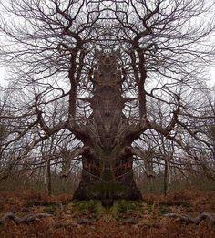 bomen - Google zoeken