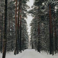 Winter Time, Winter Holidays, Winter Snow, Beautiful World, Beautiful Images, Winter Wonderland Wallpaper, Winter Beauty, Fantasy World, Nature Photos