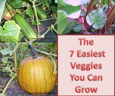 Easiest Veggies You Can Grow - Ever.
