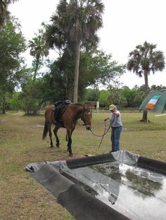 horse obstacle course - ooh what's scarier than a tarp? A tarp filled with water! Haha great obstacle :)
