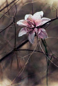 Rosa grå höst