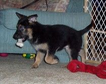 http://www.examiner.com/german-shepherd-in-akron/your-german-shepherds-name    You can call your dog anything you wish, but if you buy a puppy from a good breeder he will probably already have a name.  Learn about the differences between registered and call names in this article.