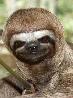 sloths are just the funniest animals ever... i mean look at that face :D