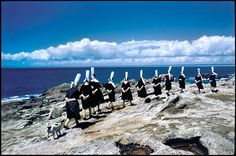 La Gallery For Fine Photography présente une exposition sur le travail d'Elliott Erwitt, composée de 40 photographies noir et blanc et couleur. Certains clichés sont issus du nouveau livre intitulé « Kolor », un chef-d'œuvre regroupant des diapositives couleur et des Kodachromes réalisés par Erwitt