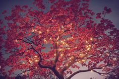 cherry blossom tree decorated with a string of lights. by maryann