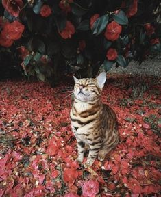 animals-lovers:(Source) Cat in nature   animals-lovers:  (Source)  Cat in nature