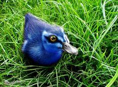 Blue duckling by figoz. I'm a sucker for a blue duck. Love Birds, Beautiful Birds, Animals Beautiful, Ducky Duck, California Condor, Bee Hummingbird, Life Pictures, Bird Watching, Bird Feathers