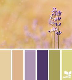 color field 11.8.13