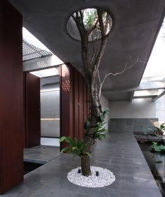 Indonesian architectsfrom Budi Pradono design trees growing through houses.