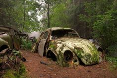 When World War Two ended, departing American soldiers parked their cars in the forest near Chatillon, Belgium. Intent on retrieving them in the future, the years passed and the cars remained where they'd been left almost seven decades earlier. The forest has grown up around them, their shells rusting into the earth.