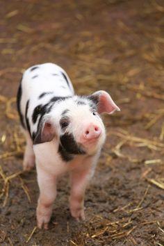 Image de animals, vegetarian, and veganism