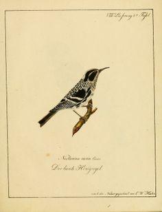 Voegel, aus Asien, Africa, America und Neuholland, in Abbildungen nach der Natur mit Beschreibungen / - Biodiversity Heritage Library