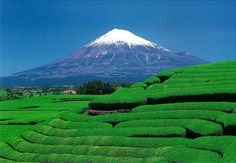 Mt. Fuji, Japan   -  surrounded by green tea fields. ~ Because Harold climbed it when he was stationed there!!!