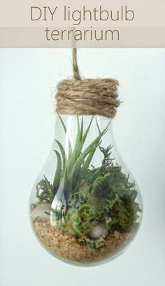 9 Blinking DIY Light Bulb Planter & Terrarium Ideas is part of Upcycled Crafts Garden DIY Projects - Add a whim to your indoor or outdoor garden by trying these unique DIY Light Bulb Planter and Terrarium Ideas from this article! Light Bulb Plant, Light Bulb Terrarium, Hanging Light Bulbs, Terrarium Diy, Terrarium Wedding, Light Bulb Crafts, Recycled Light Bulbs, Garden Web, Diy Garden