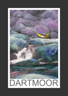 Grey Wagtail amongst the rocks in a Dartmoor stream (Art Print)