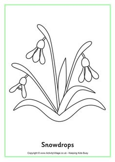 have fun with this colouring page featuring the pretty snowdrop perfect for early spring