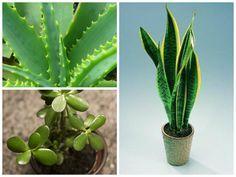 Plants Which Are Safe For Your Bird Aviary Rośliny, które są bezpieczne dla ptaków Aviary