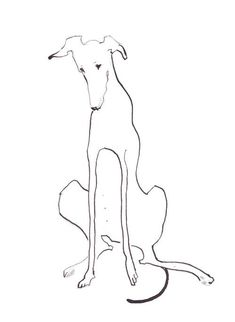 dog art this dog is created almost out of one pen line- yet expresses so much even with so little detail- maggie: Art And Illustration, Greyhound Kunst, Animal Drawings, Art Drawings, Arte Tribal, Dog Paintings, Dog Portraits, Dog Art, Art Inspo