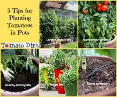 5 tips for planting tomatoes in pots to get off to a good start. http://www.tomatodirt.com/planting-tomatoes-in-pots.html