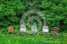 Old beehives stock image. Image of rural, background - 69845271 Architecture Details, Stock Photos, House Styles, Image, Home Decor, Decoration Home, Room Decor, Home Interior Design, Home Decoration