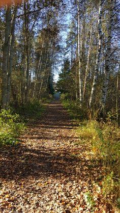 Pieni polku metsän halki vie, mulle ollut on se........