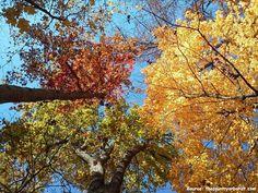 walnut state park 2