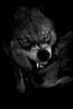 """Shadow Within - Christian Houge - """"Shadow Within"""" explores Man's relation to the wolf and ultimately, to Himself. In this photo project, I wish to invite the viewer to look at the raw nature and purity which the wolf represents and how this reflects the condition of Man and his own shadows materialized as taboos in our society."""""""