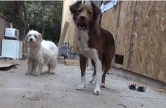 Meet Melody and Macy, the two Sweetest, Gentlest Dogs Ever to be Rescued (VIDEO)