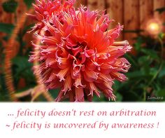 ... #felicity doesn't rest on arbitration ~ felicity is uncovered by #awareness !