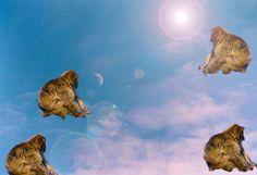 Monkeys in the sky