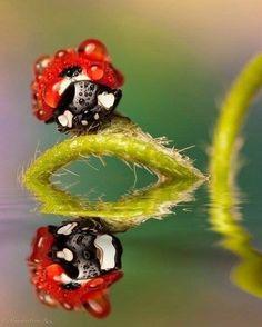 Lady~Bug Reflection