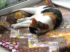 I just love having a kitty that coordinates nicely with my quilts | Flickr - Photo Sharing!
