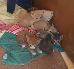 A stray mother cat persuaded her rescuer to let her back out so she could lead her to her babies.