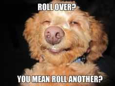 What Stoned Dogs Might Say If They Could Talk