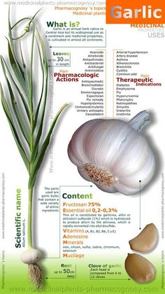 Skinny Diva Diet: Infographic: Garlic Medicinal Properties Uses