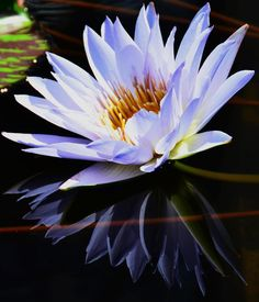 Like art, religion is an imaginative and creative effort to find a meaning and value in human life.  Karen Armstrong - water lily, flower, nature, white, water, reflection