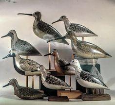 A nice gathering of HV Shourds shorebirds Tuckerton NJ early 20th century.