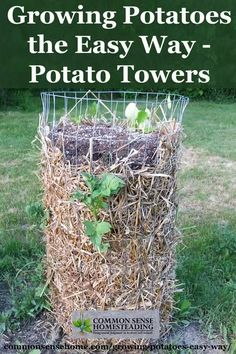 Growing Vegetables Growing Potatoes in potato towers is an easy container gardening option. You can save space and make harvesting easier for you and the kids with this DIY option. Growing Veggies, Growing Plants, Potato Growing Containers, Grow Potatoes In Container, Fall Containers, Succulents In Containers, Container Flowers, Container Plants, Organic Gardening