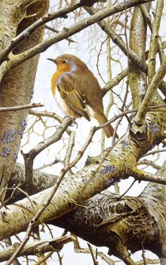 Wildlife Paintings, Wildlife Art, Animal Paintings, Bird Artists, Backyard Birds, Bird Drawings, Bird Pictures, Watercolor Bird, James Bond