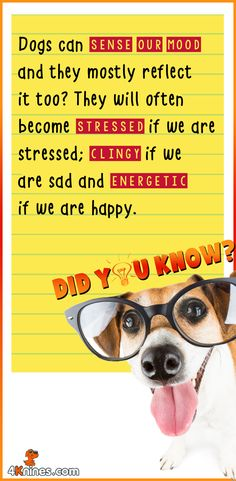 Wondering why your dog is too clingy when you're feeling blue? Here's why!