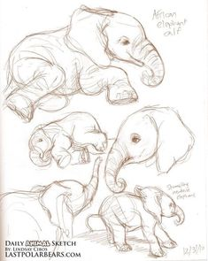 40 Free & Easy Animal Sketch Drawing Ideas & Inspiration - Elefanten - Home Easy Sketches, Art Drawings Sketches, Sketch Drawing, Drawing Ideas, Animal Sketches Easy, Drawing Tutorials, Sketching, Tattoo Sketches, Sketch Ideas