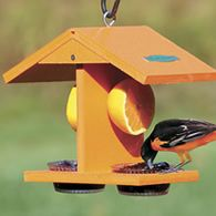 nearly time to get the oriole feeders out -- some woodpeckers like oranges and grape jelly, too!