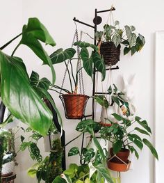 Clever Ways To Hang Your Plants - Clever Bloom